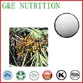100g New Arrival Saw palmetto/Serenoa repens/sabal Extrato com frete grátis