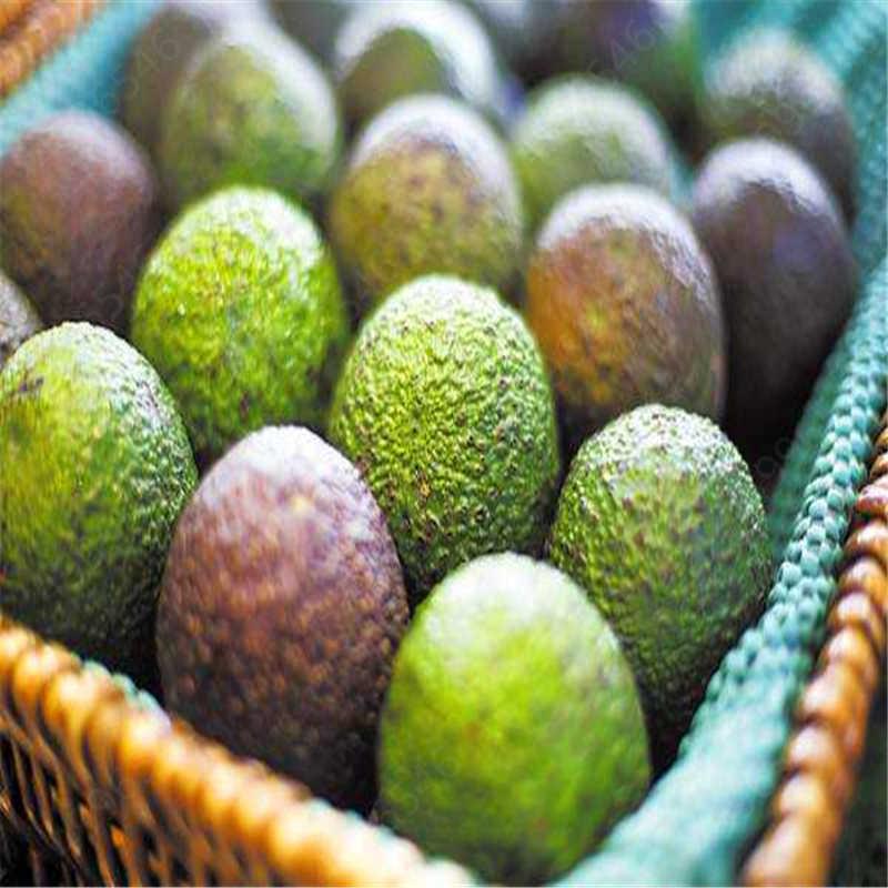 Sale Promotions 2pcs Rare Mini Avocado plant Delicious Pear Fruit plant Easy Grow For Home Garden Germ Bonsai Free Shipping
