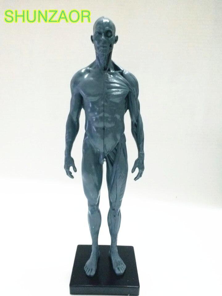30 cm modelo humano para los hombres pu Piel Gris esqueleto anatomía ...