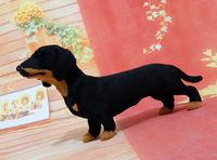 About 20x13cm Black Dachshund Dog Hard Model Polyethylene Furs Handicraft Figurines Miniatures Home Decoration Toy Gift