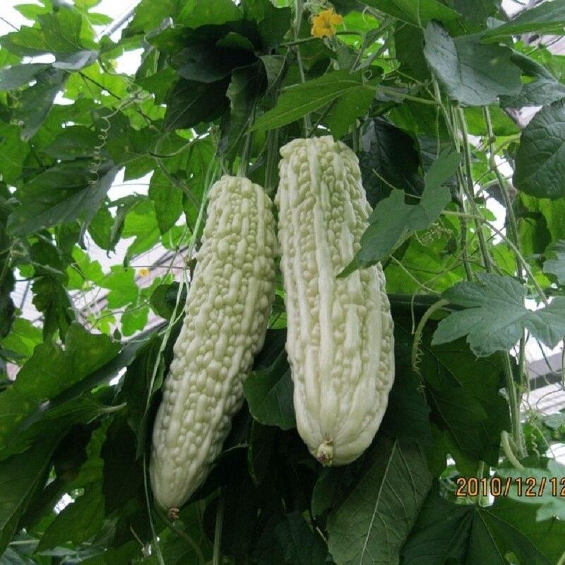 font-b-f1-b-font-white-jade-gourd-seeds-vegetable-seeds-5-seeds