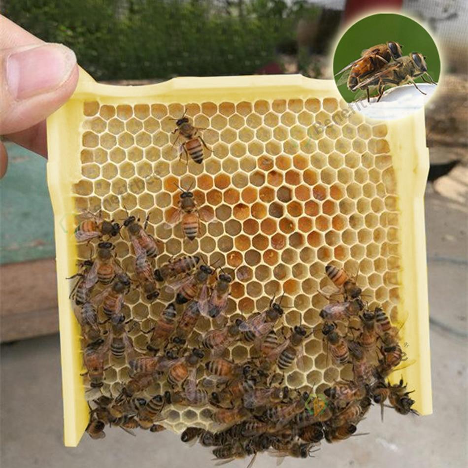 Image 5 - Пчеловодство улей Урожай улей королева вязка Hive выгодная пчела бренд королева вязка улей инструмент пчеловода apculture-in Пчелиные ульи from Дом и животные
