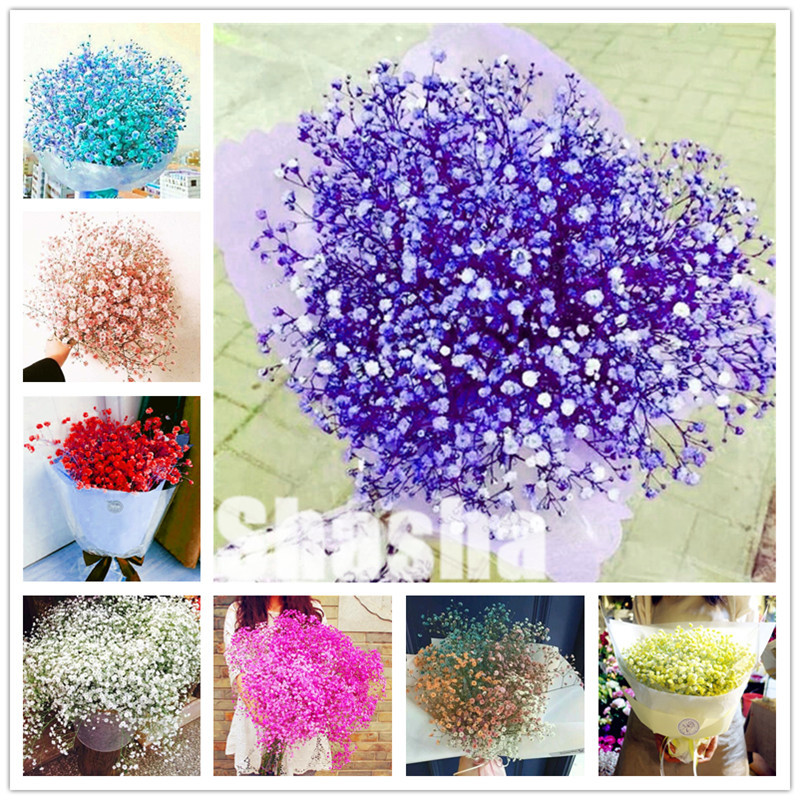 200Pcs Purple Gypsophila Paniculata Bonsai Garden Multi-Color Sky Stars Flower Ornaments Plant Natural Growth Wedding Decoration