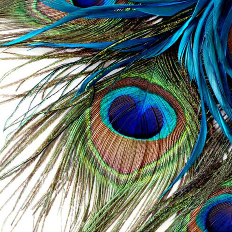 High Quality Custom Mural Wallpaper 3d Blue Peacock Feather Large