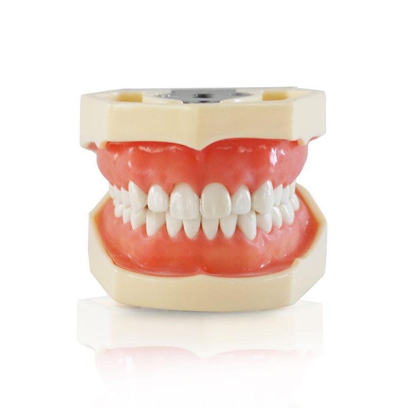 Зубные все съемные Зубы Модель 28 шт. Стоматологическая модель зубов для зубных практика