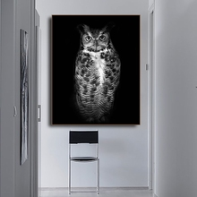 Owl Photography Animals Print on Canvas Home Decoration Wall Art Oil Painting Pictures Postesrs for Living Room Bedroom