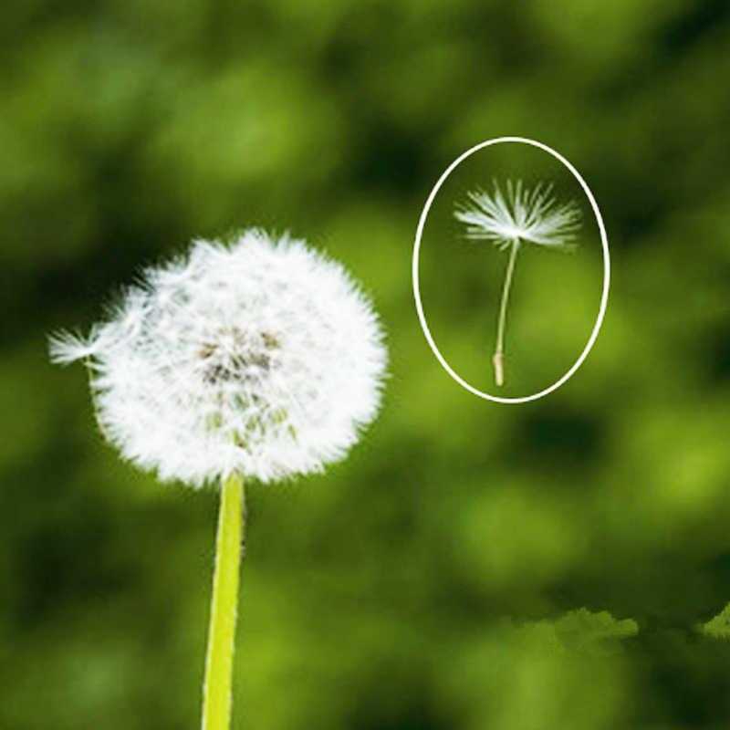 VOLTOP Dandelion สร้อยคอเครื่องประดับจี้ Key Chain ดอกไม้แห้งดอกไม้ Noble แฟชั่นอุปกรณ์ตกแต่งความปรารถนาสำหรับ Freedom