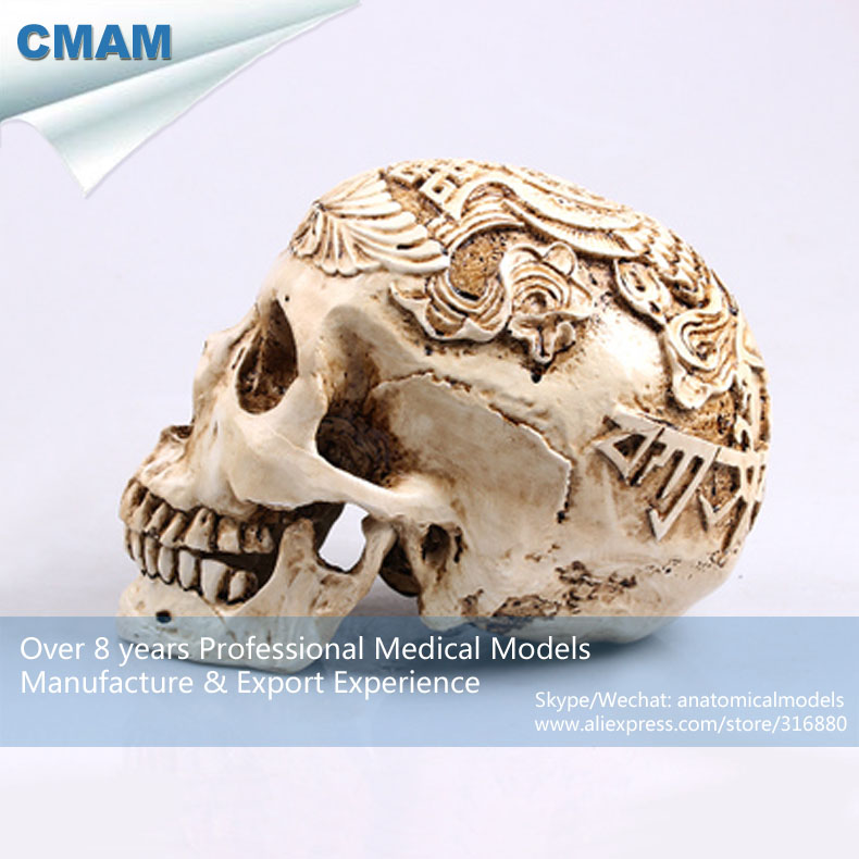 CMAM PRC61 1:1 tamaño Natural Escultura Cráneo Cabeza Cuerpo ...