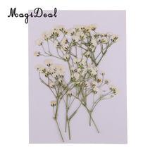 10 настоящий прессованный высушенный цветок, натуральные сухие детские цветы, сделай сам, скрапбукинг, искусство, ремесла, открытка, украшение, цветы