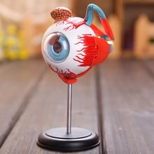 3d модель глаз 32 шт собранная модель анатомии человека новая 3D структура головоломки глаз
