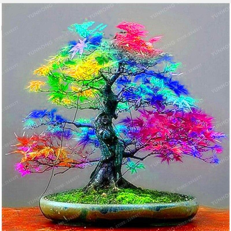 635 🛒 20 Pcs Rare Blue Maple plant Bonsai Tree Plants Pot