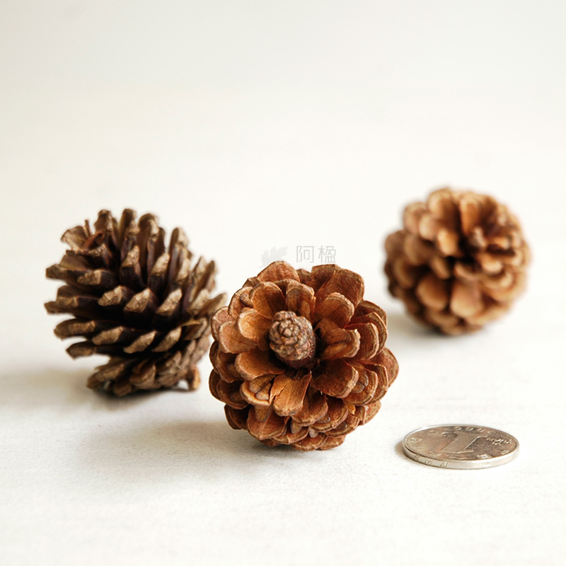 Pinecone pine cone natural plants decorative flowers dried for Decorative flowers for crafts