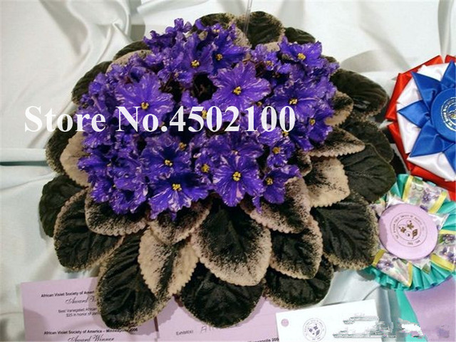 100 Pcs African Mini Bonsai Violet, Mixed Rare Flower For Garden Potted Perennial Herb Indoor plants Evening-Scented Stock