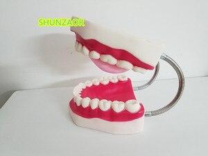 Image 3 - 6 kez plastik diş modeli diş manken insan hareketli dil ağız tıbbi frasaco diş