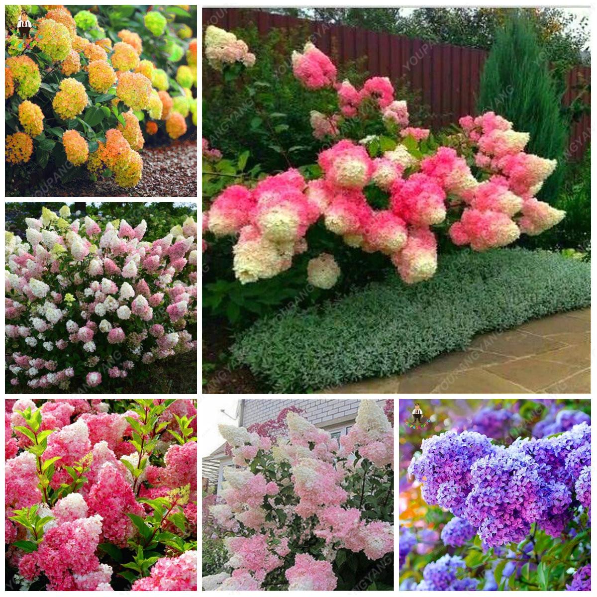 30Pcs Bonsai Garden Hydrangea Flowers Perennial Little