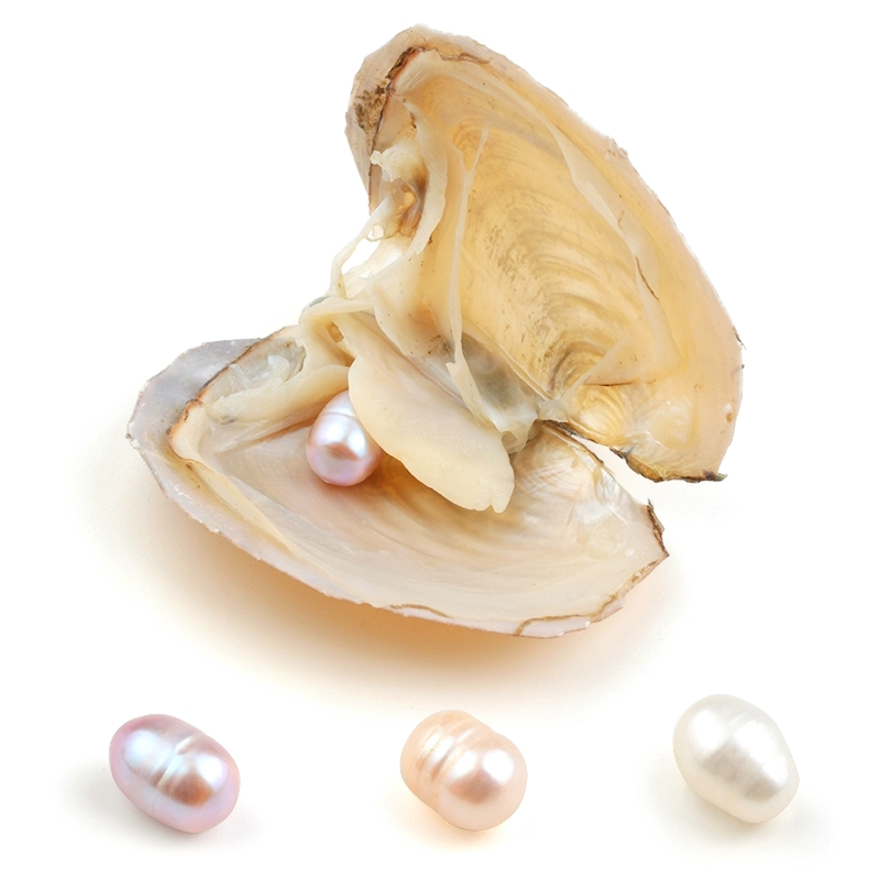 Lavender Pearls Oyster Surprise Gift Jewelry-Making Oval Akoya Pink White for 8-9mm 1PCS