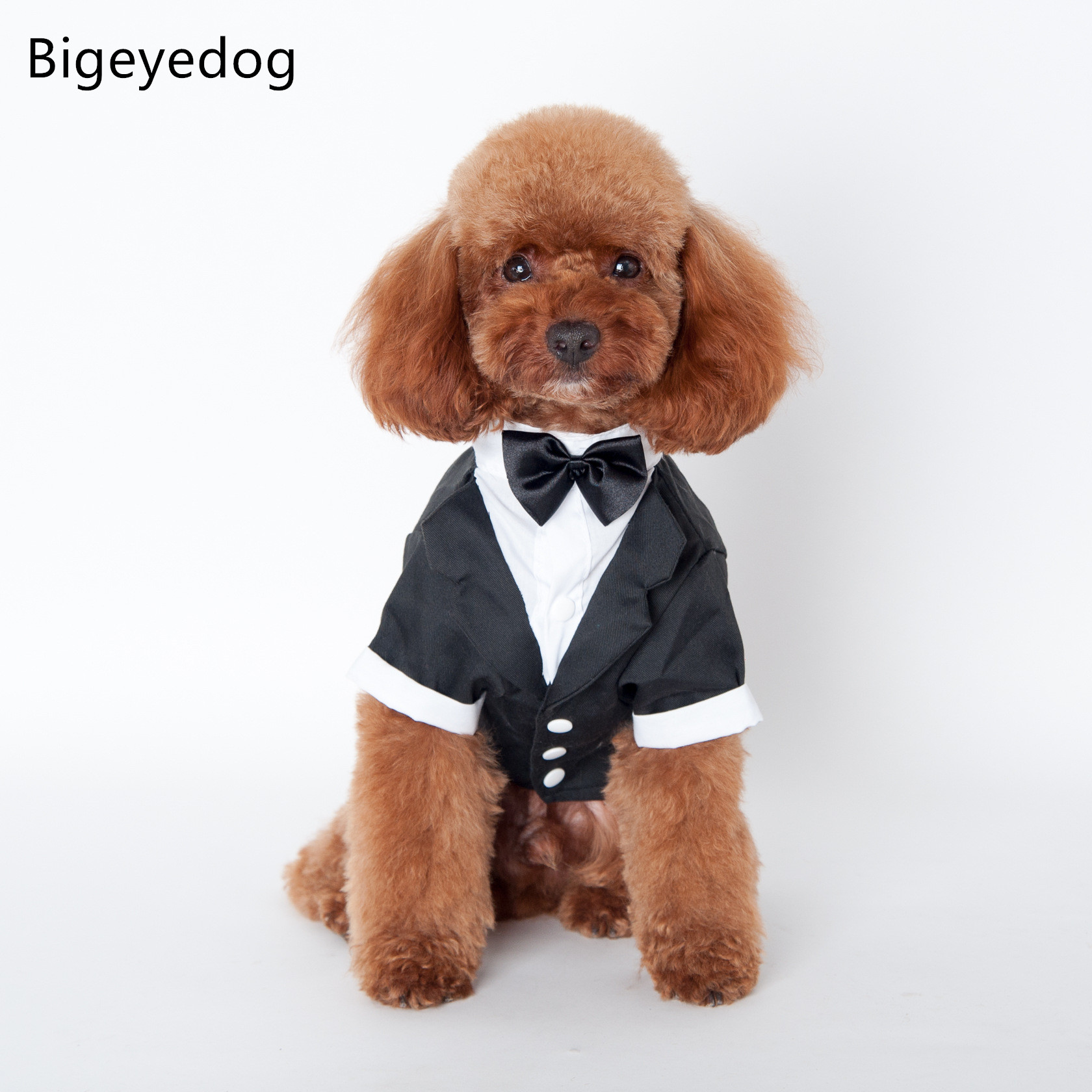 Small Of Dog In Suit