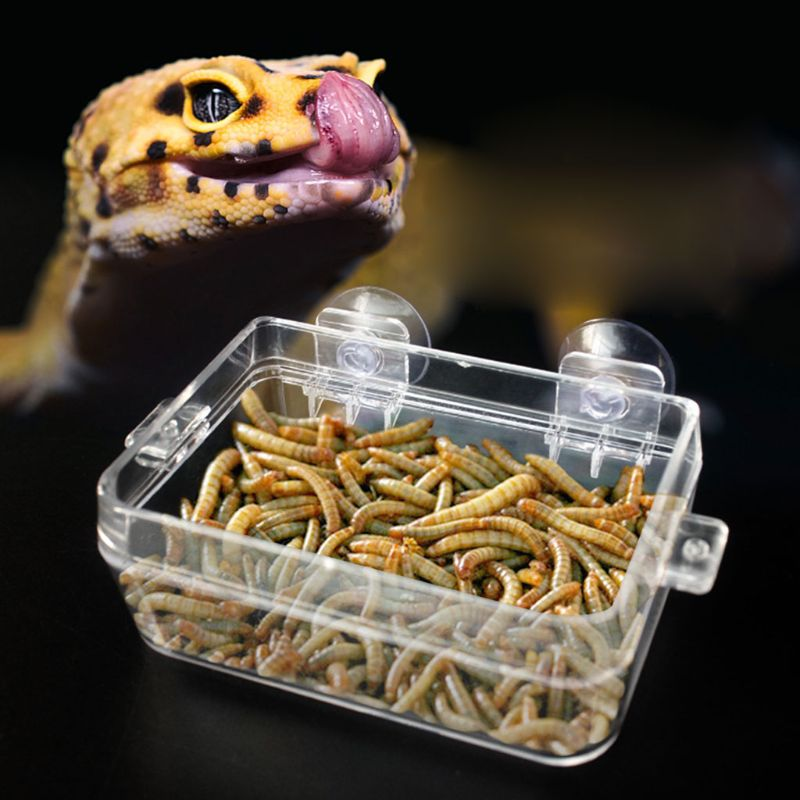 Reptile Food Bowl Anti-escape Turtle Lizard Worm Food Container -HJI