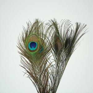 Image 2 - Hoge Kwaliteit Natuurlijke Pauwenveer 20 40 cm DIY Fotografie Props Decoratie Gevederte Ambachten voor fotostudio accessoires