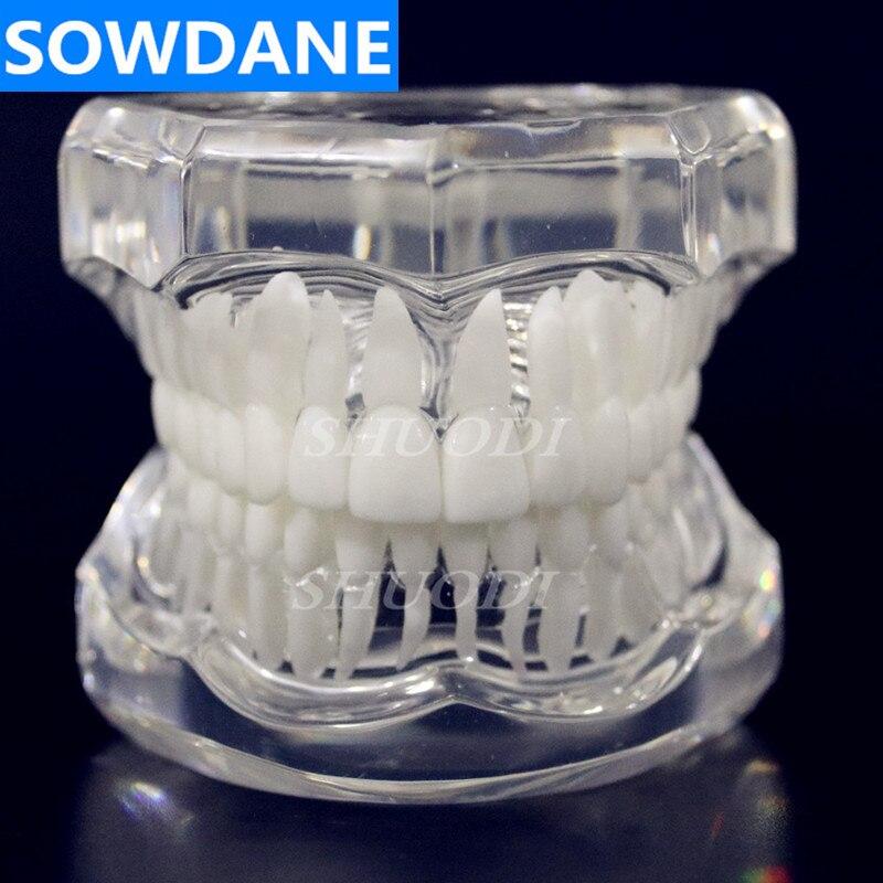 1 шт. Стоматологическая стандартная модель зуба Ортодонтическая модель для связи пациента стоматологическая клиника