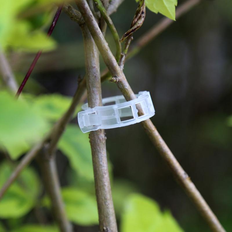 Пластик завод Поддержка зажимы 50/100 шт лоза помидоры стволовых овощей фиксирующий Зажим садовая теплица аксессуары 30 мм зажимы для растений