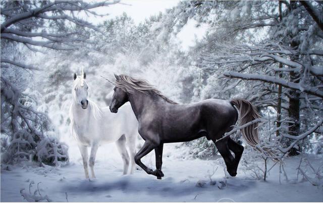 Custom 3d Horse Wallpaper A Black And White For The Living Room