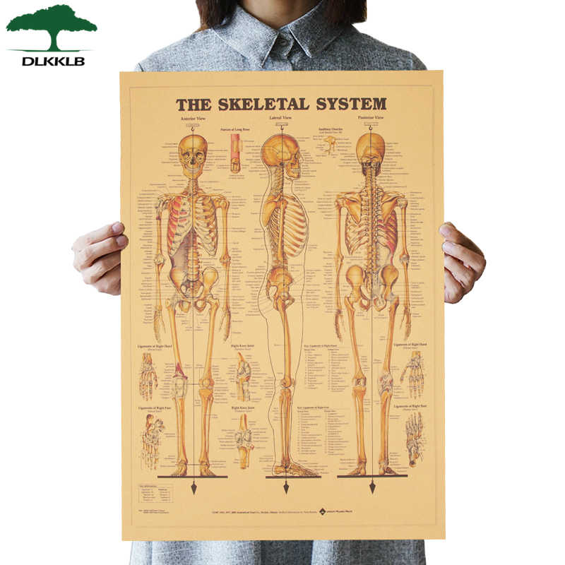 DLKKLB The Skeleton of The Body Structure Nervous System Vintage Poster Bar Home Decor Retro Painting 51.5x35.5cm Wall Sticker