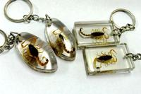 free shipping 12 keychain real golden cool scorpion lucid style jewelry