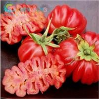 100pcs Garlic plants Red And Healthy Bonsai Diy Plant Rare Onion Garlics Vegetable  Very Easy Grow For Home & Garden