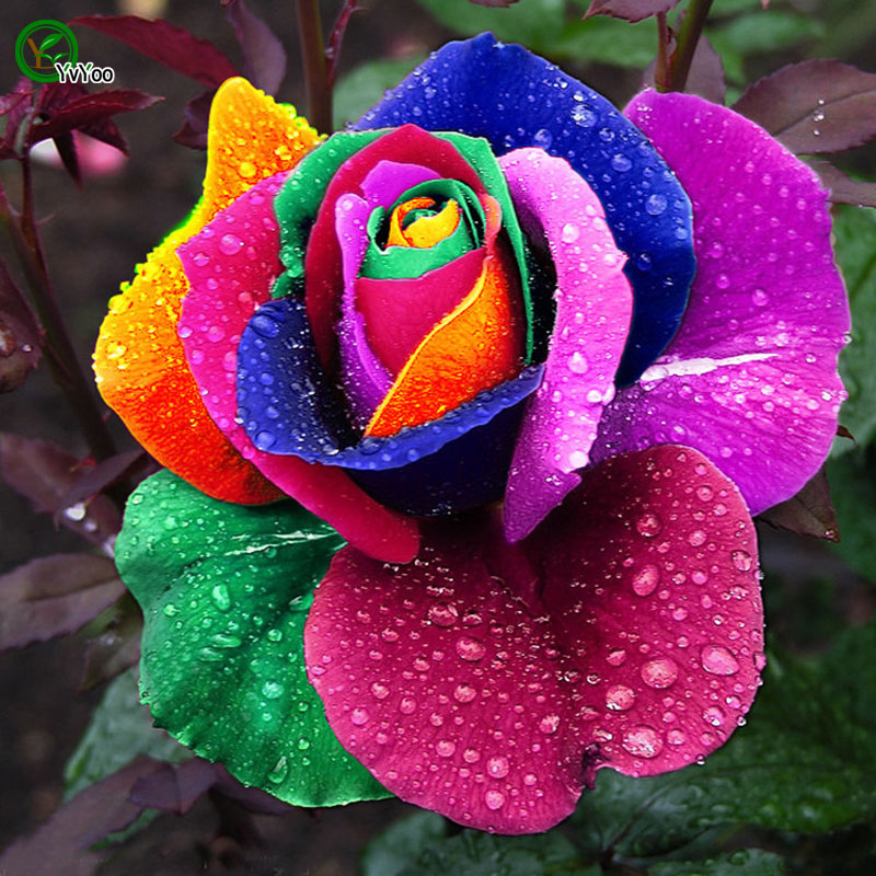 Bonsai MIX Smuk Rainbow, Rose balkon blomsterplanter kunstig bonsai til Home Floriculture 50 partikler / masse w012
