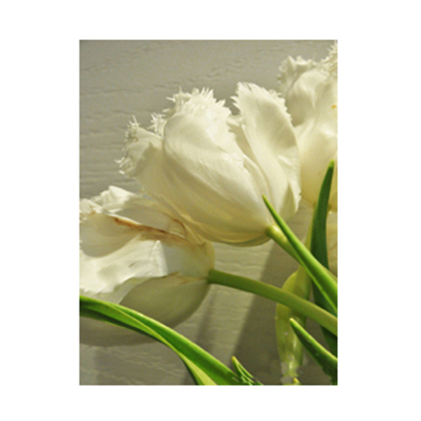 Rare white fluffy seeds edge of flower petals water lily tulip tulip rare white fluffy seeds edge of flower petals water lily tulip tulip flower plant 120 lot in bonsai from home garden on aliexpress alibaba group mightylinksfo