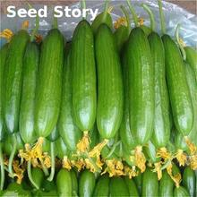 No-gmo Delicious Cucumber Sementes 100 Pcs / Lot Cucumber Seeds Rare Fruit And Vegetable Seeds For Home Garden Planting Bonsai(China)