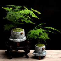 Small stone mill creative cement bonsai flower pot Wenzhu green plant potted home interior succulent Chinese retro flower pot