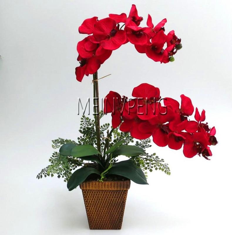 Leiðtogi sölu! Bonsai Orchid blóm Bonsai, falleg Orchid Phalaenopsis garður planta heim pott með Orchid gæði blóm plöntur ...