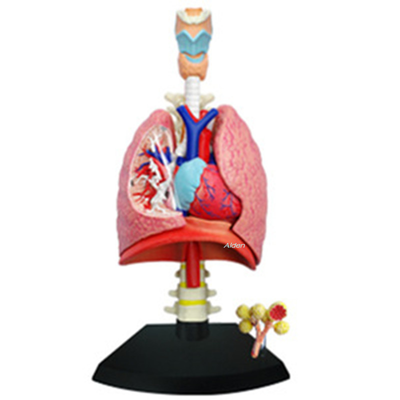 Kaws 4D XXRAY BRIAN Original Fake Lung Human Body Anatomy Of The Organ BFF Street Art Plastic Action Figure Toy BOX 20CM Z1482Kaws 4D XXRAY BRIAN Original Fake Lung Human Body Anatomy Of The Organ BFF Street Art Plastic Action Figure Toy BOX 20CM Z1482