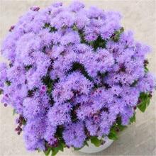 Popular Ageratum PlantsBuy Cheap Ageratum Plants lots from China