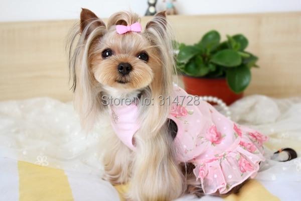 Freies Verschiffen Chiffon Blume kleine Bärenjunge Teddy Party Hund - Haustier-Produkte - Foto 2