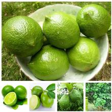 30 PCS/ bag Green Lemon Bonsais Fruit Garden Terrace Outdoor Orchard Farm Family Potted Bonsai Tree Lime Plant for Flower Pot