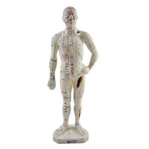Image 3 - 26 センチメートル医療中国医学経絡鍼灸モデル経穴マネキン鍼モデル