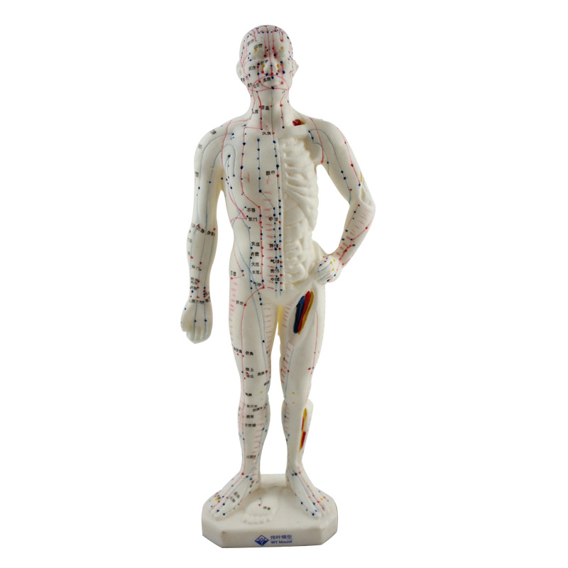 Medical Chinese Medicine Meridians Acupuncture and Moxibustion Model Acupuncture Point Mannequin Acupuncture Manikin Model 26cm moxibustion of traditional chinese medicine portable acupuncture box smoke free body care massage