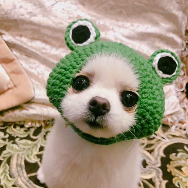 7ff5cb36d2f705 Hot Sale Hand-knitted Pet Hats Frog Cat Hat forDog Hat Hairband Dog Cap  Green