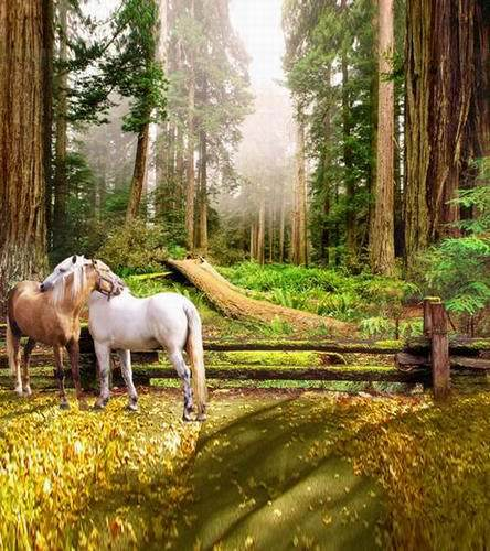 Horse in Forest 5X7ft Camera Fotografica Background for Photo Studio Wedding Vinyl  Photo Backdrops new wholesale vlt xd600lp projector lamp for xd600u lvp xd600 gx 740 gx 745 with housing 180 days warranty happybate