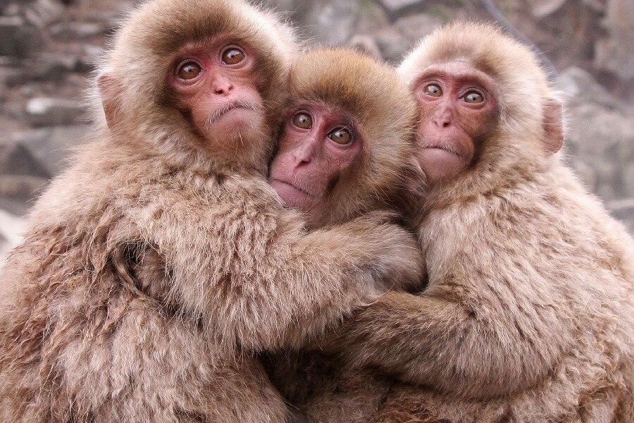 Image result for babuini imagini