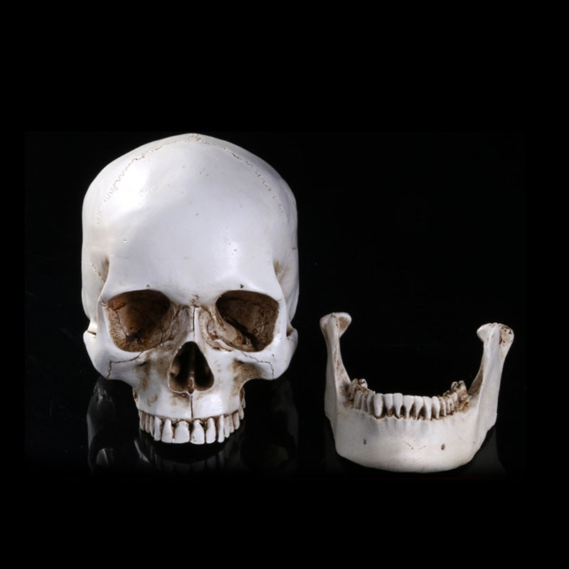 resin statues removable simulation skull halloween decorative home pub decor medical teaching appliances skeleton sculpture - Halloween Statues
