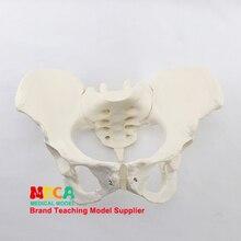 1:1 модель женского таза подвздошный симфизис Лобки демонстрационная модель тазовой медицины обучение MGP008