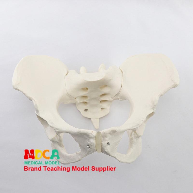 1:1 Female Pelvis Model Iliac Symphysis Pubis Demonstration Model Pelvic Medicine Teaching MGP008