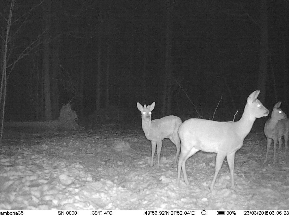 Hunting Camera GPS 4G Scout Guard Night Vision Hunter Camera Chasse Infrared Game Wild Trail Foto Traps Camara De Caza Chasse (10)