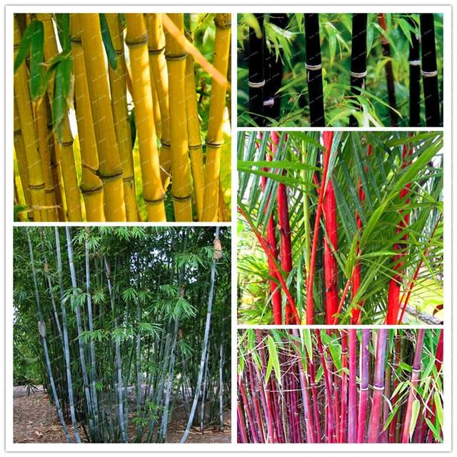 € 0.47 49% de réduction|10 pcs \ sac pot hybride, jardin de bambou rare,  air pur, décoration maison, couleurs rose, rouge, jaune, vert, bonsaï ...