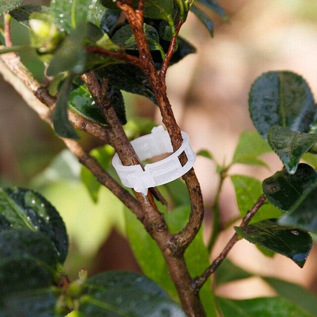 Durable Plastic Plant Support Clips For Types Plants Hanging Vine Garden  Vegetables Garden Combination Tools 50Pcs