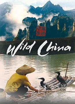 《美丽中国》2008年英国,中国纪录片电视剧在线观看